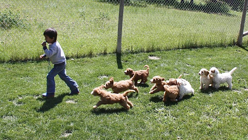 The puppies learn how to follow Lucca as he toots the whistle.