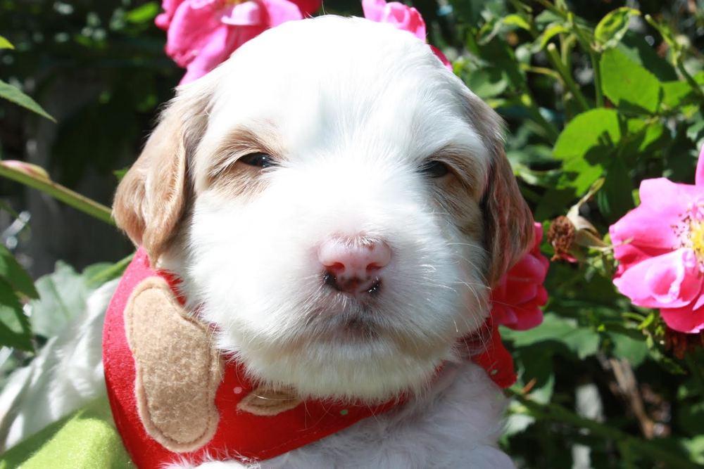 Precious Pink Girl