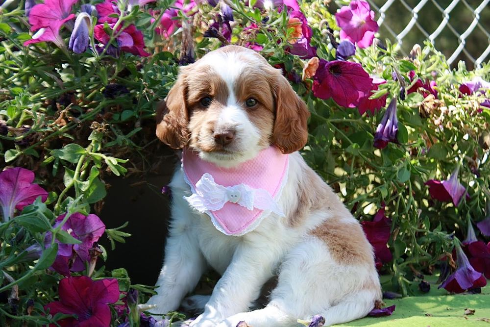 Pretty Pink Girl