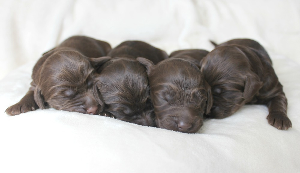 Four dapper, chocolate boys!
