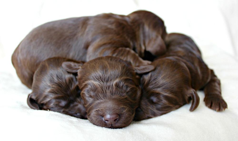 Four dapper, chocolate boys!