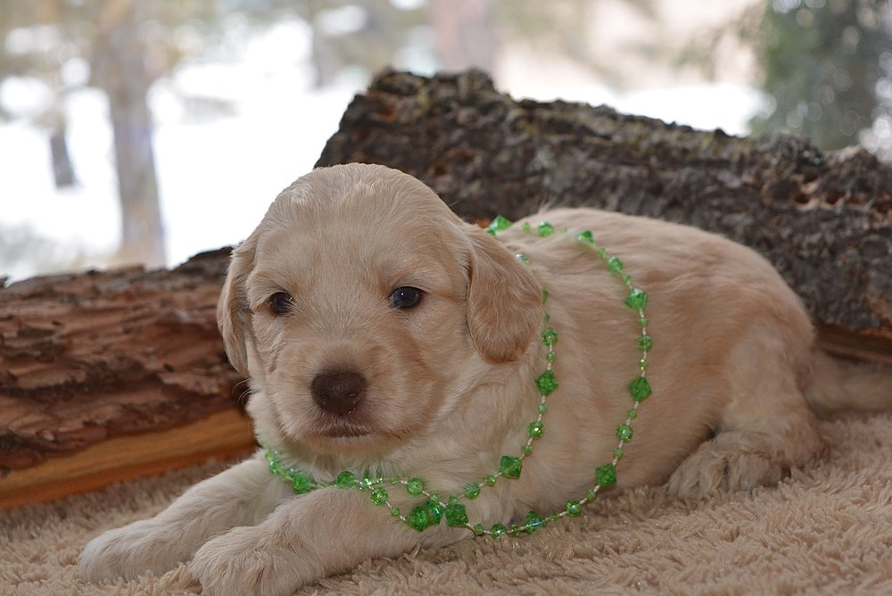 Merry No Collar with her green jewels :)
