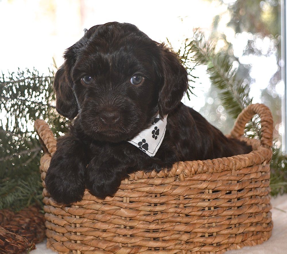 Nothing like a good basket of dark chocolate :) I could gobble him up!