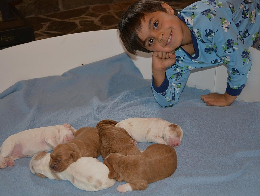Lucca cheesing with the puppies!