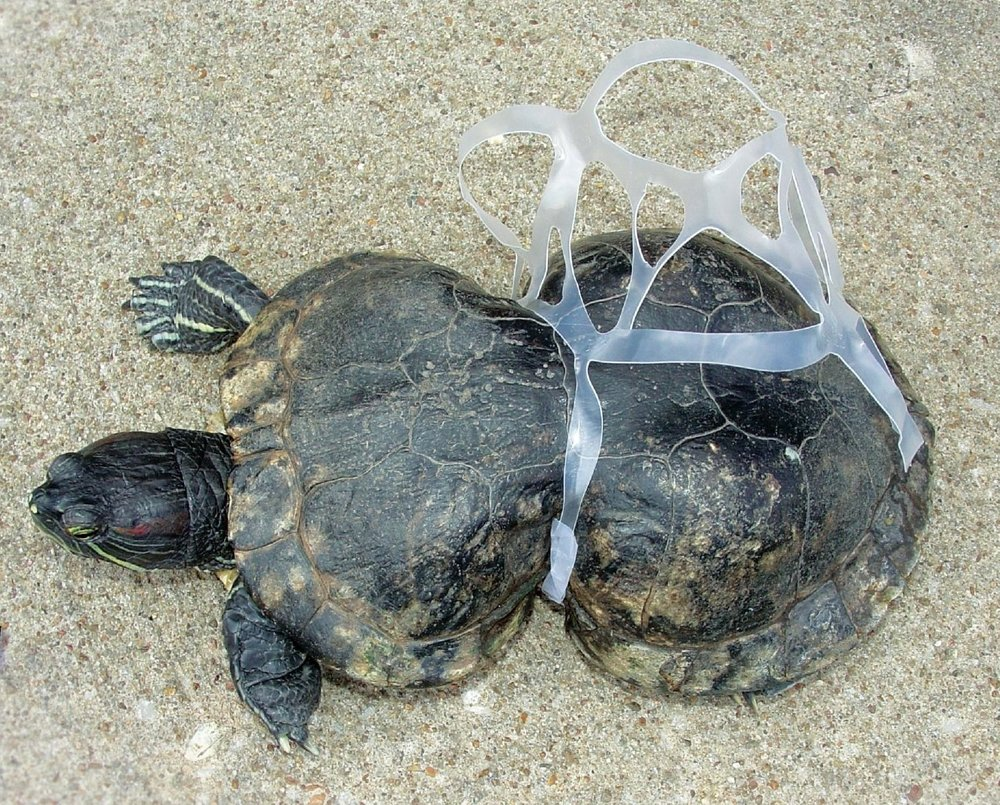 photo_plasticpollution.jpg