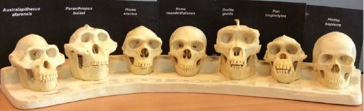 These skulls were printed out