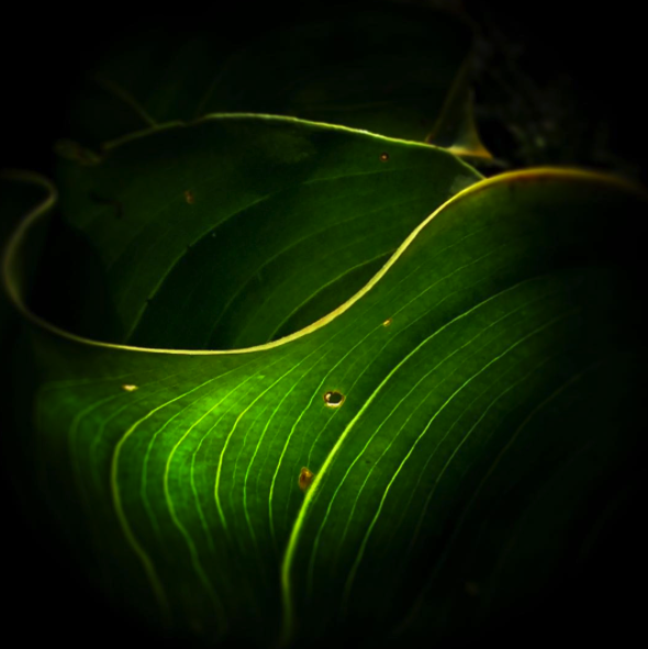 Green-Leaf-2.png