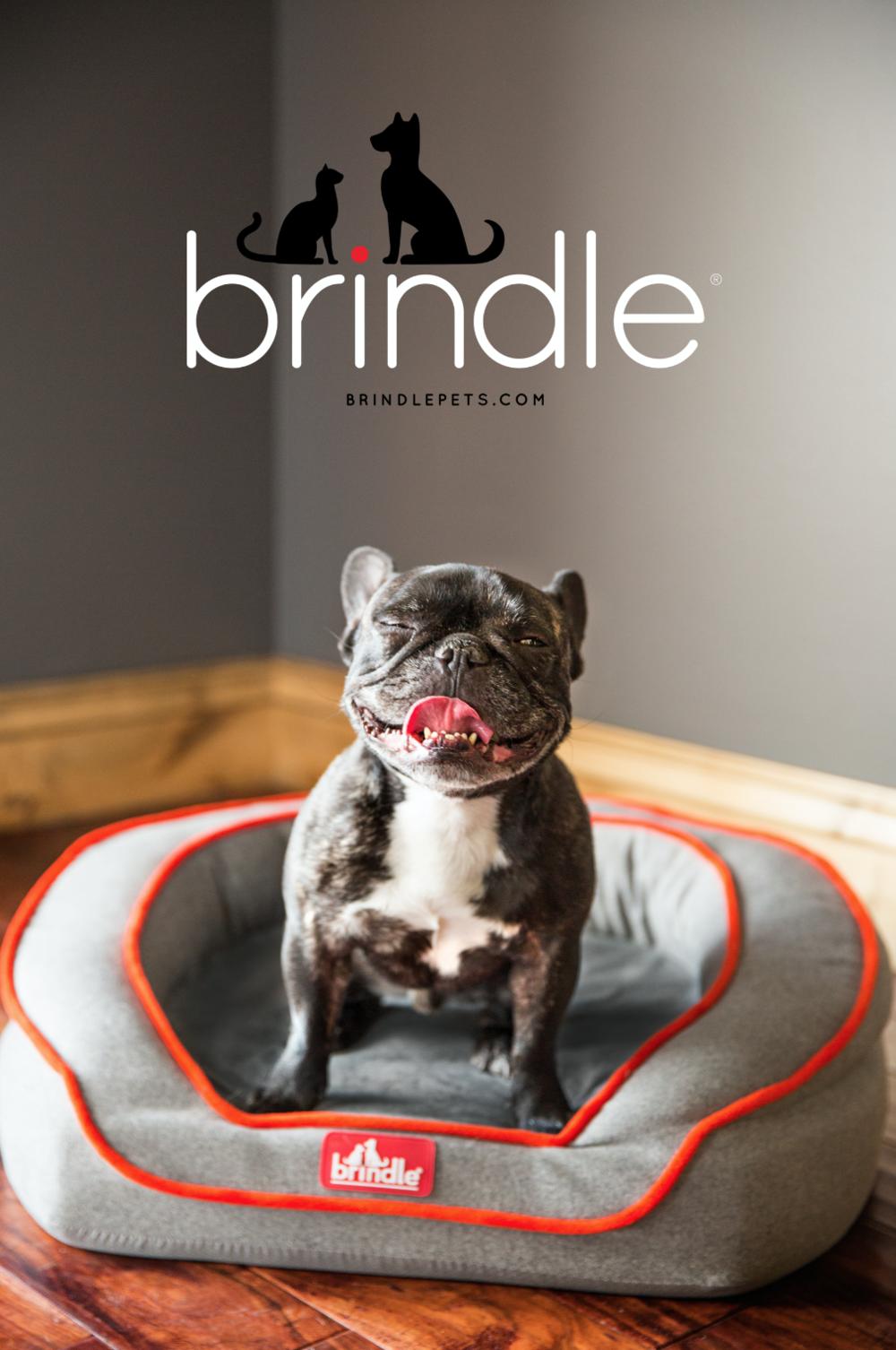 Brindle_TradeshowBanner.png