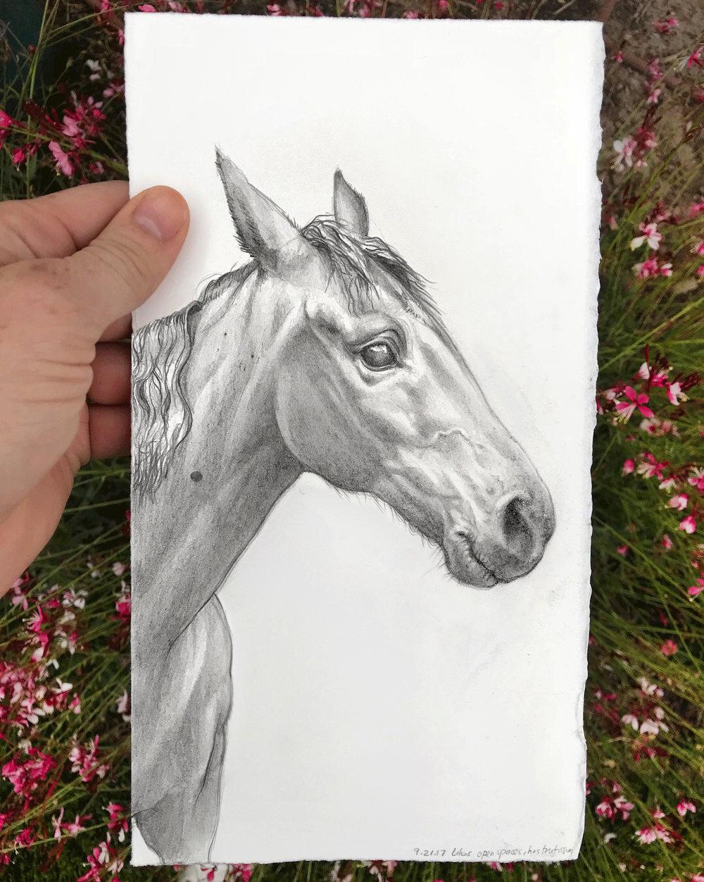 Pony_full.jpg