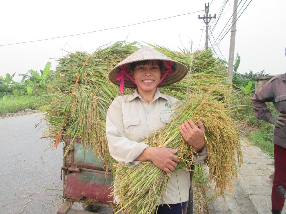 Thành viên mạng lưới sản xuất Fargreen - Trần Thị Hằng