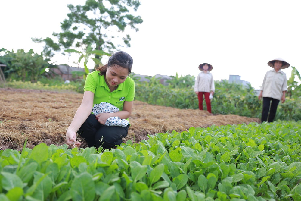 野菜を収穫してみよう -