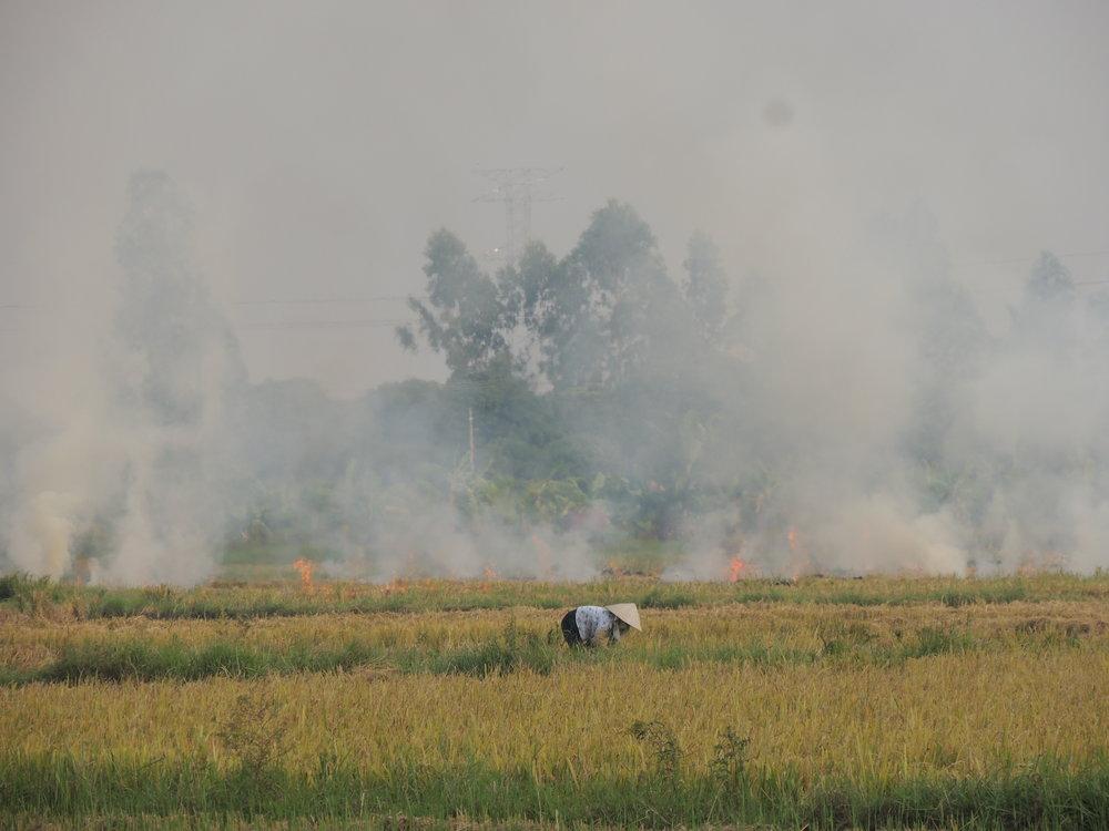 燃やさない - 米の収穫後、稲わらを野焼きするのではなく、稲わらを集めてキノコを栽培し、環境破壊を止め、コミュニティの健康と環境を保護しています。
