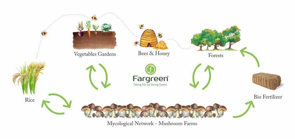 Fargreen Ecosystem.JPG