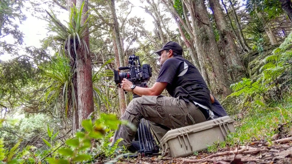 DEEP IN THE FOREST OF THE NEW ZEALAND WEST COAST, WAIPU FILMING PROJECT EDEN
