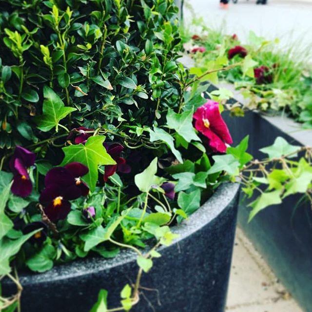 Idag kom äntligen våren till Studio Sjövillan & bästa @christel_gardenary som hjälper oss med blommor 🌸🌸🌸