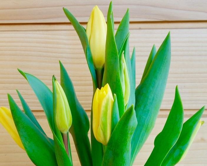 Tulip+course.jpg