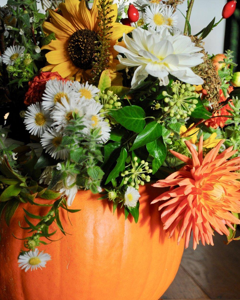 Mini+pumpkin+crop+.jpg