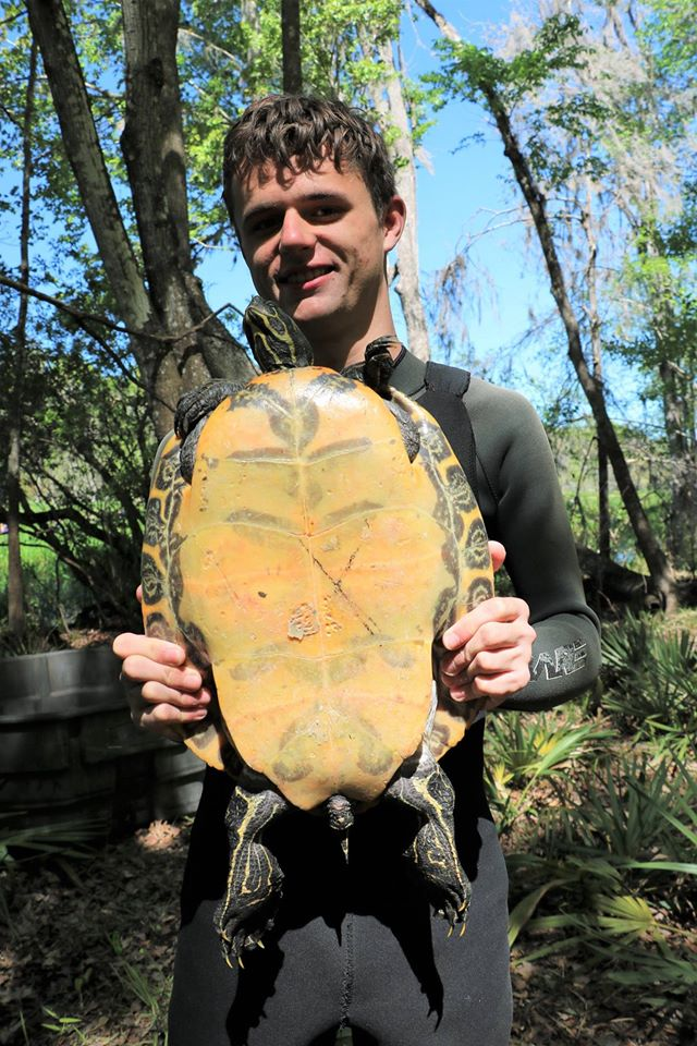 TBTY partner Andrew Farren holding a female Suwannee cooter (Pseudemys concinna suwanniensis), the sixth species of The Big Turtle Year, at Ichetucknee Springs State Park (Columbia County, Florida). Photograph by George L. Heinrich.
