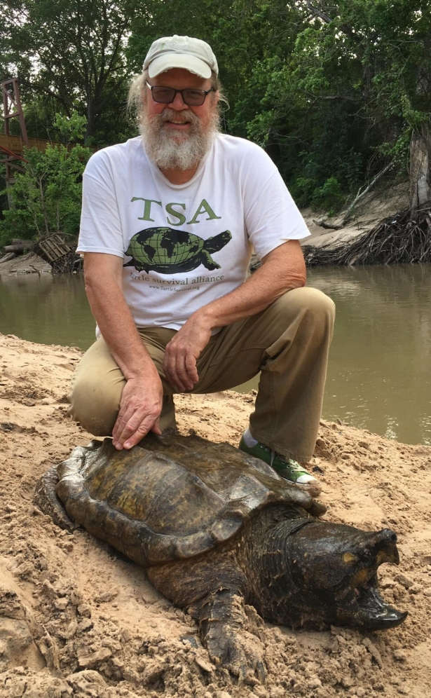 George L. Heinrich with an adult male alligator snapping turtle (Macrochelys temminckii; Harris County, Texas). Photograph by Jordan Gray.