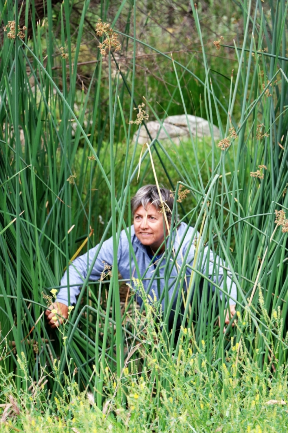 Diane Brouhard climbing through cattails at a western pond turtle ( Actinemys   marmorata ) site in Riverside County, California. Photograph by George L. Heinrich.