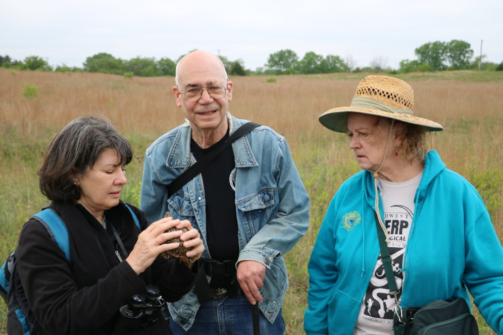 Three members of the Chicago Herpetological Society (Mike Dloogatch, Linda Manchen-Malawy, and Nancy Kloskowski) examining an ornate box turtle ( Terrapene o.   ornata ), species #32 for The Big Turtle Year, at the Thomson-Fulton Sand Prairie State Nature Preserve in Whiteside County, Illinois. Photograph by George L. Heinrich.