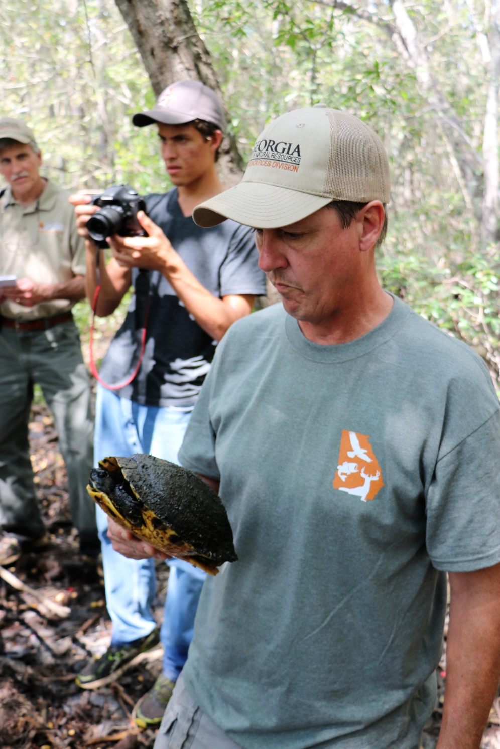 John Jensen (Georgia Department of Natural Resources) examining a common slider ( Trachemys   scripta ) captured in south-central Georgia. Photograph by George L. Heinrich.