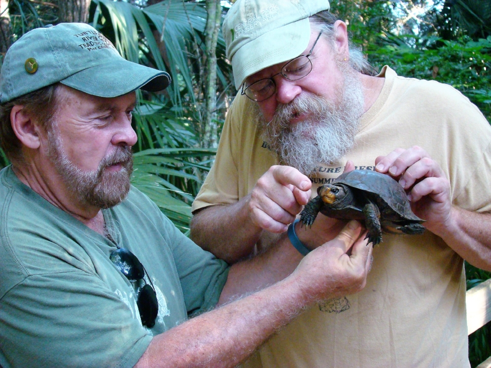 Bob Krause (left) and George L. Heinrich examining a Gulf Coast box turtle (Terrapene carolina major) during a 2015 trip in the eastern Florida panhandle. Photographer unknown.