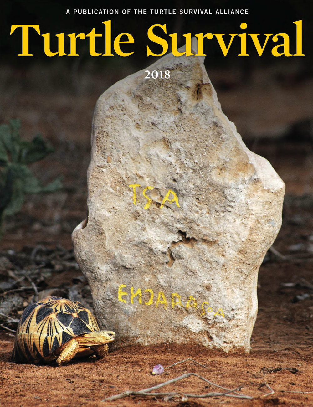 The Big Turtle Year pages  from TSA 2018 Magazine_Page_1.jpg