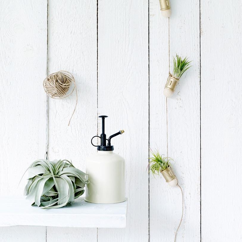 Clo Clo Libelle airplants.jpg