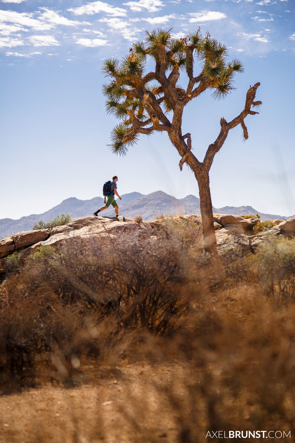 Joshua-Tree-National-park-CA-1.jpg