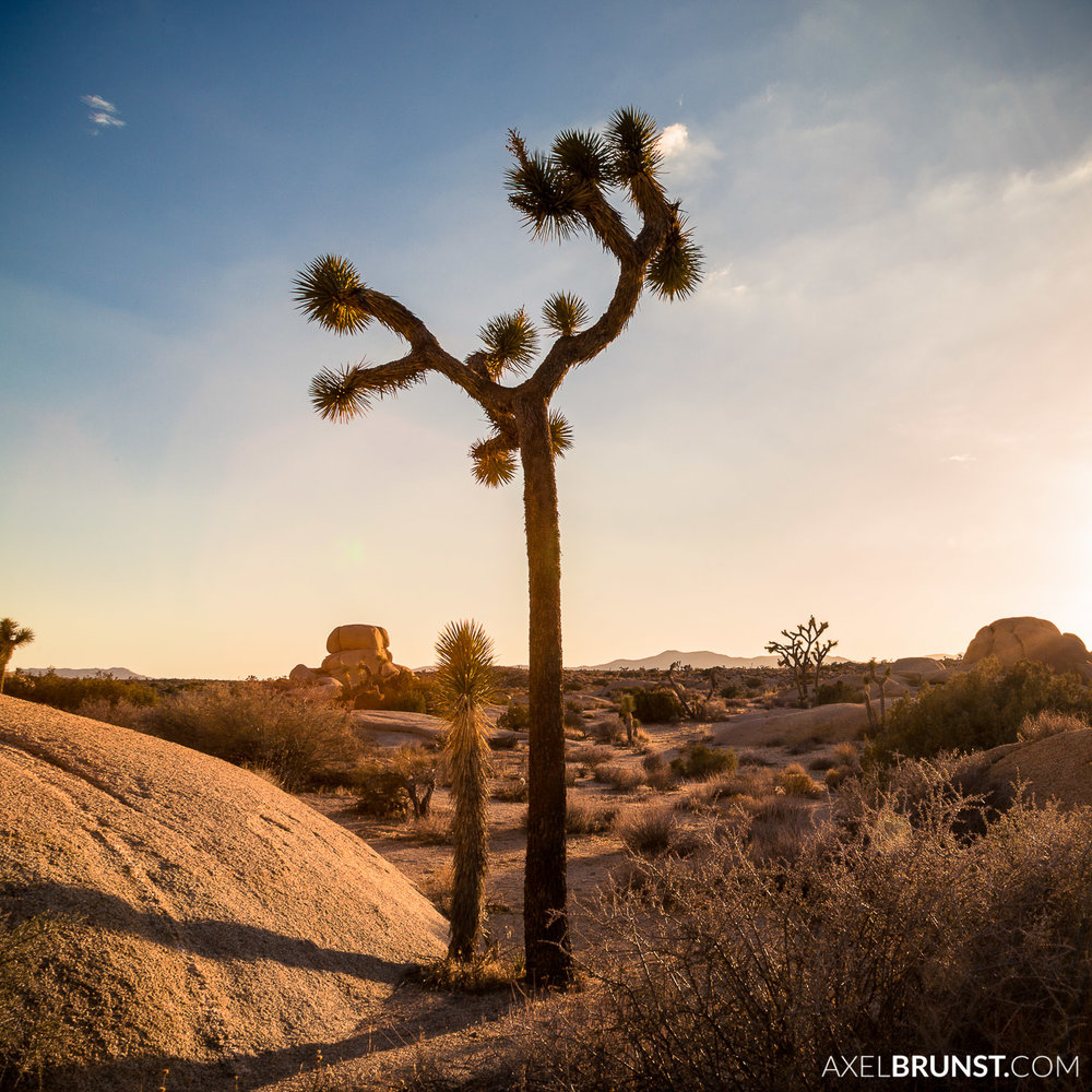 Joshua-Tree-National-park-CA-3.jpg