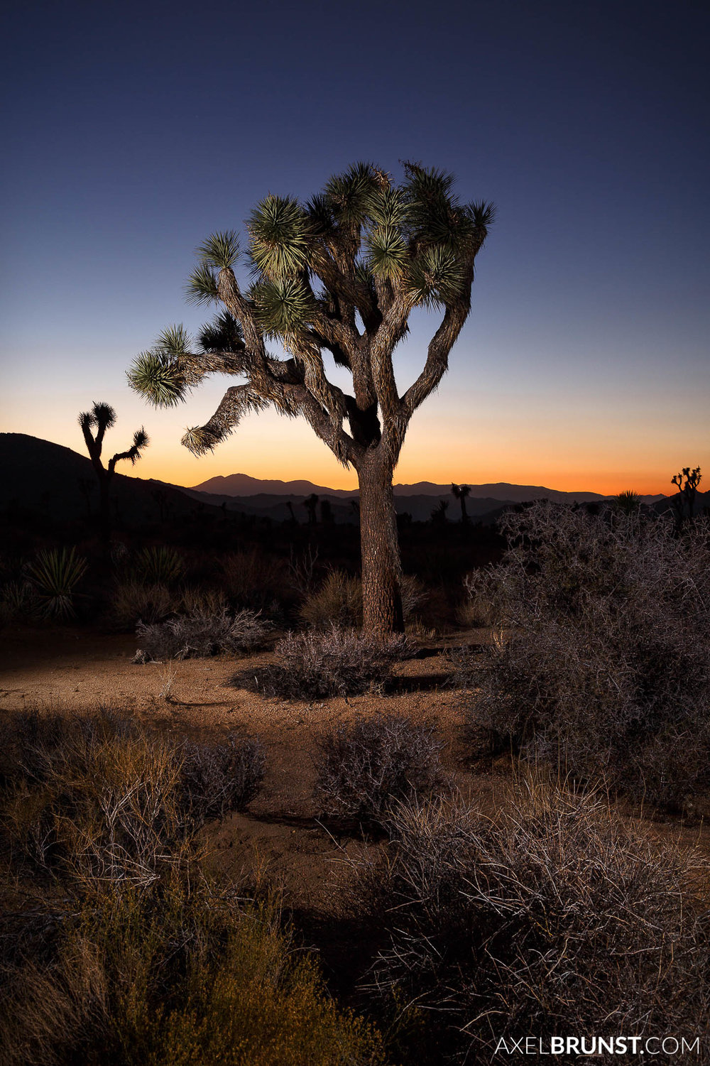 Joshua-Tree-National-park-CA-4.jpg