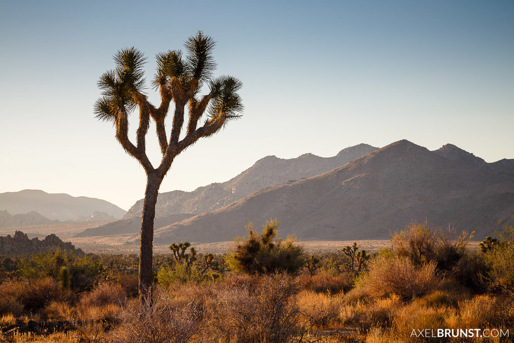Joshua-Tree-National-park-CA-6.jpg