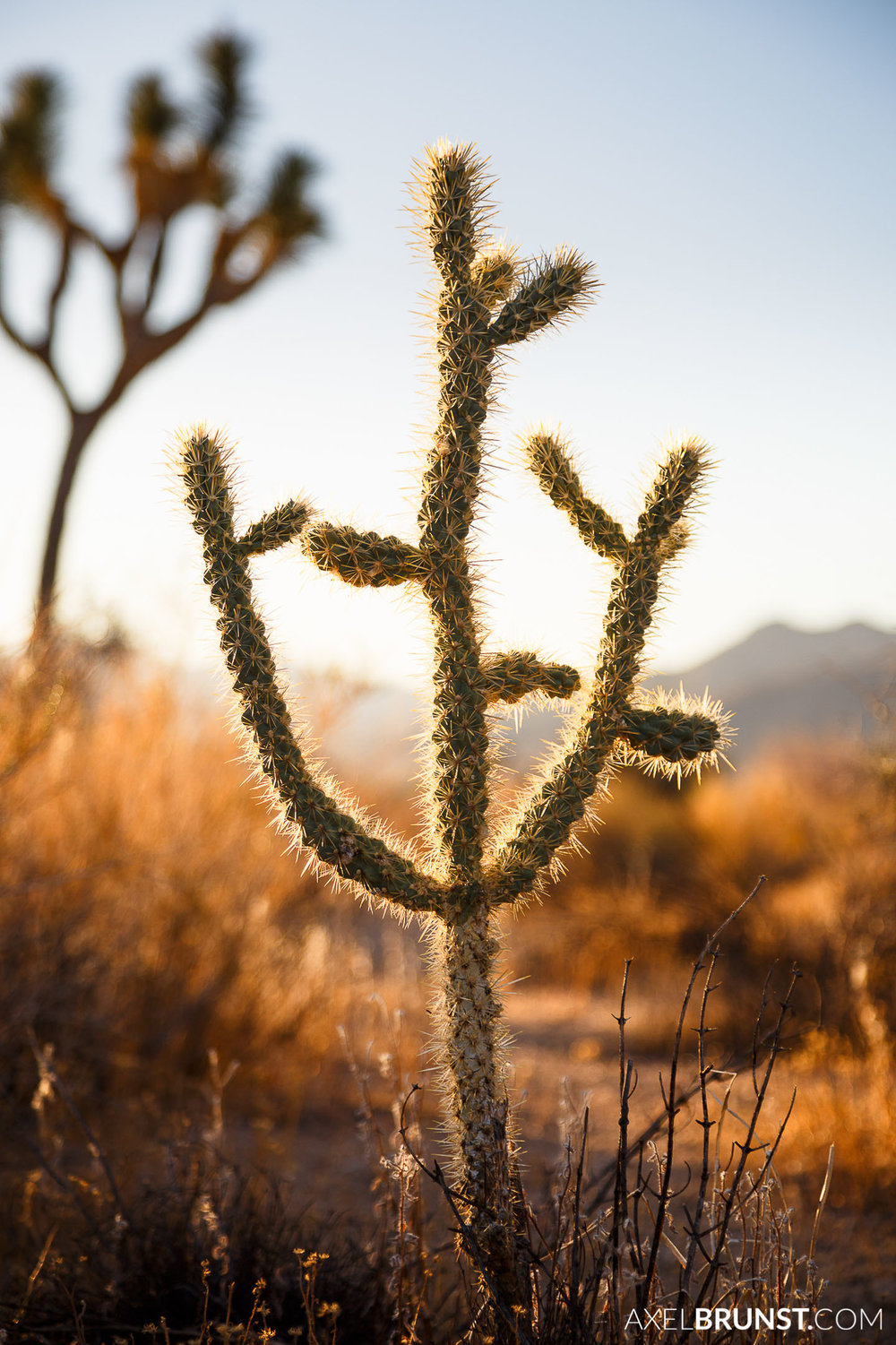 Joshua-Tree-National-park-CA-7.jpg