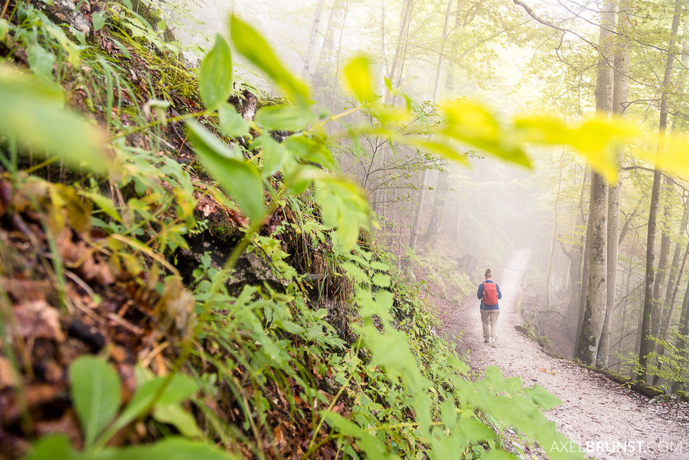 jenner-berchtesgaden-national-park-1.jpg
