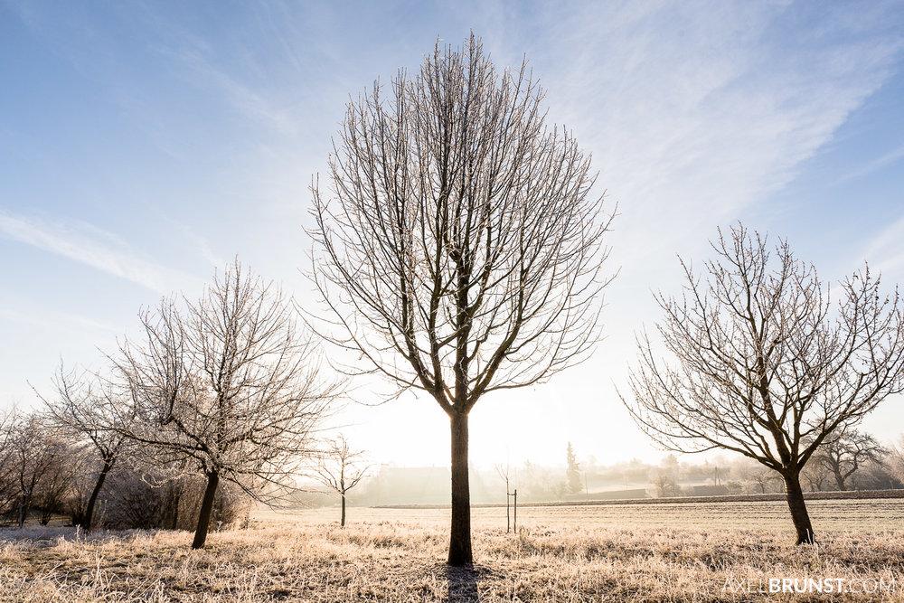 Frosty-winter-morning-Ditzingen-Germany-1.jpg
