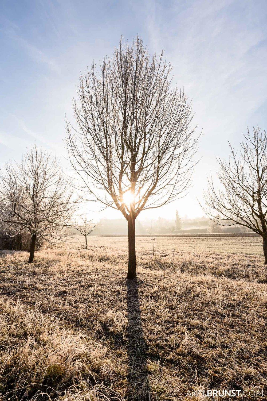 Frosty-winter-morning-Ditzingen-Germany-2.jpg