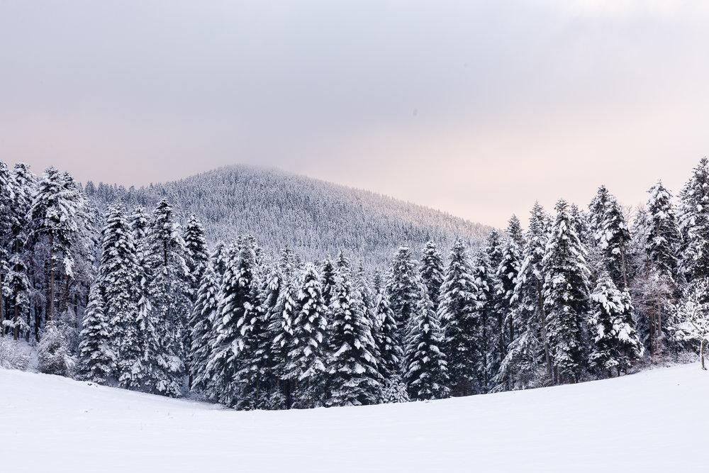 AB_20171202_Zell-Winter-Walks_060-34.jpg