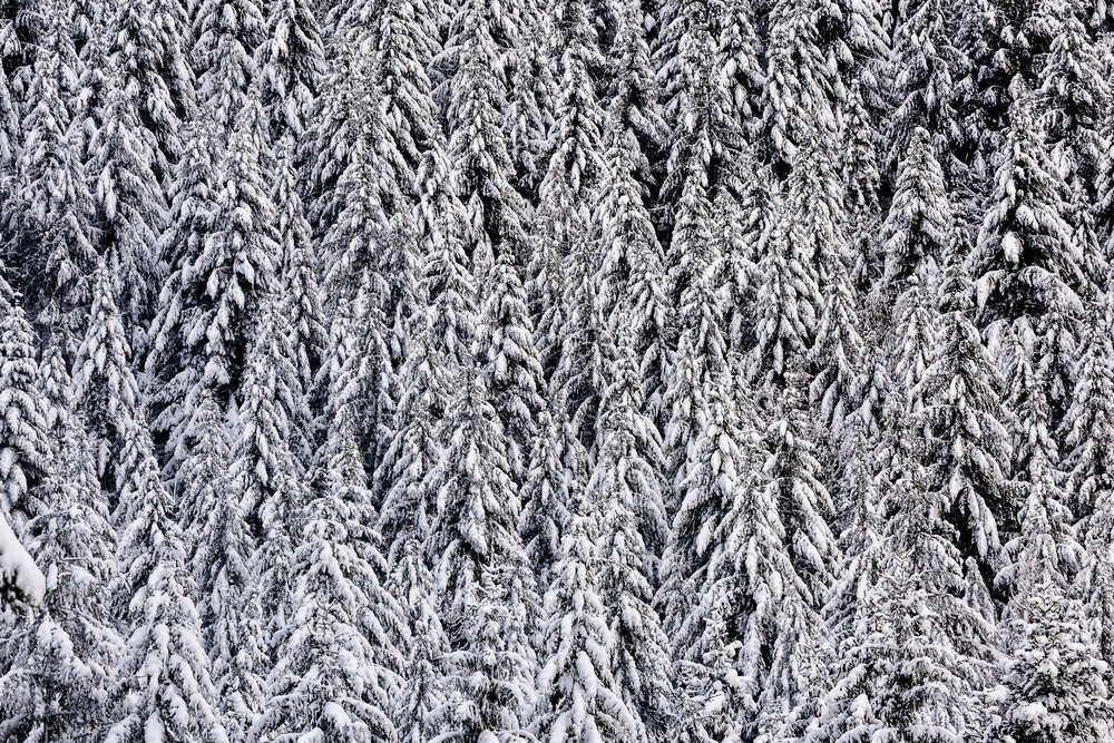 AB_20171202_Zell-Winter-Walks_060-51.jpg
