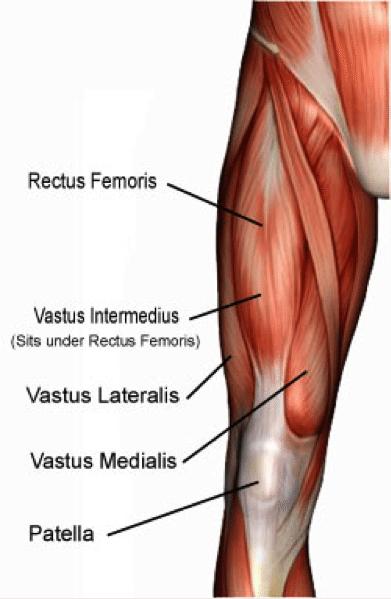 quadriceps-hockey.png
