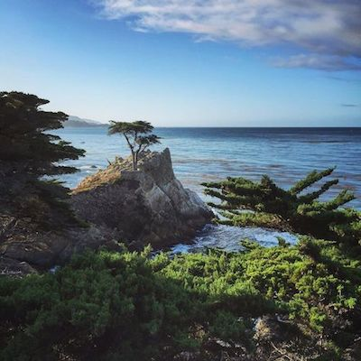 The Lone Cyress tree at Pebble Beach