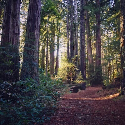 Redwoods without the crowds of Muir Woods