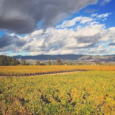 Fall color in Napa Valley vineyards