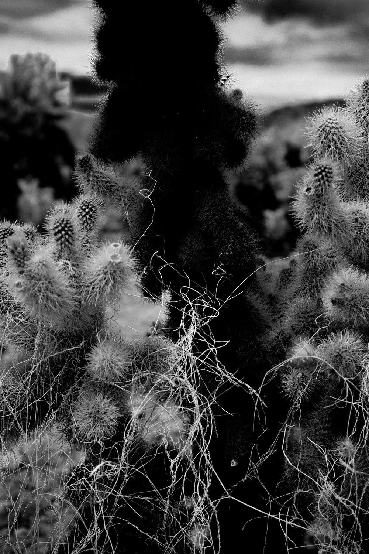 J Tree • Digital • 2015