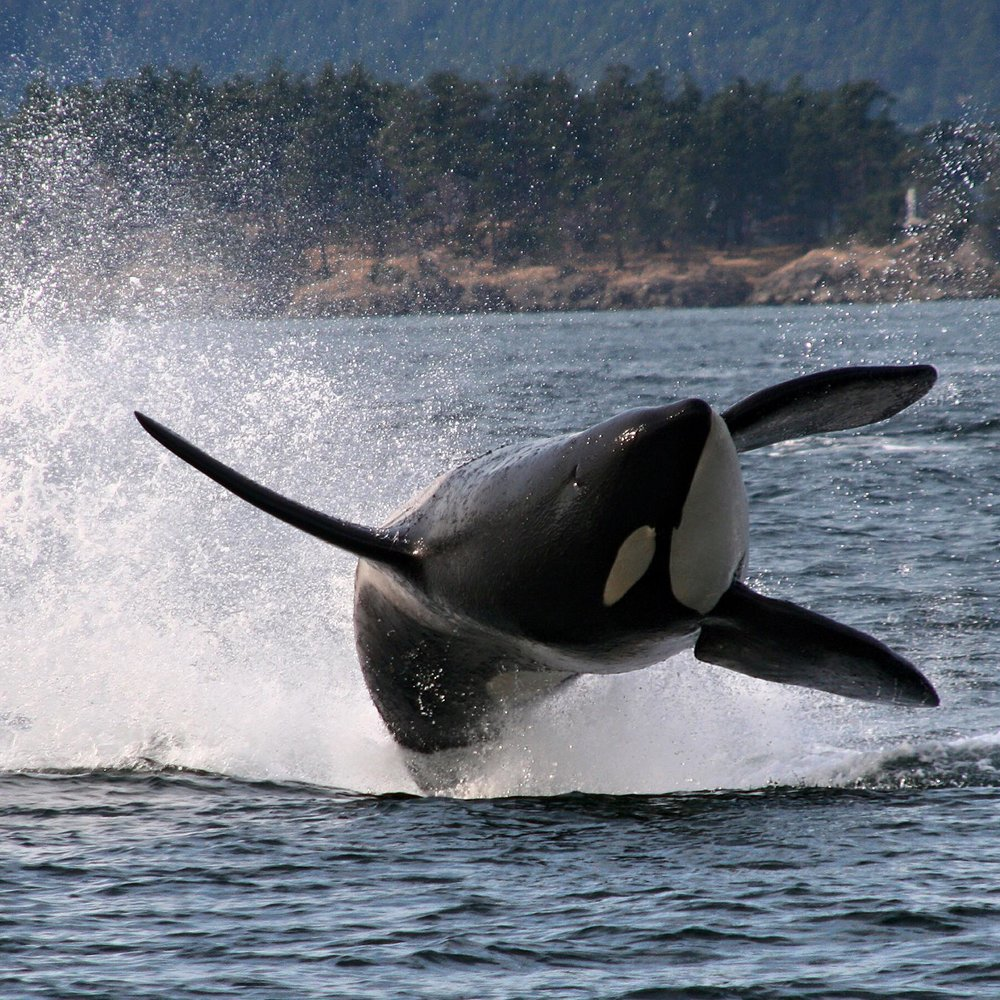 WHALE WATCHING  - MARCH 1 - OCTOBER 23