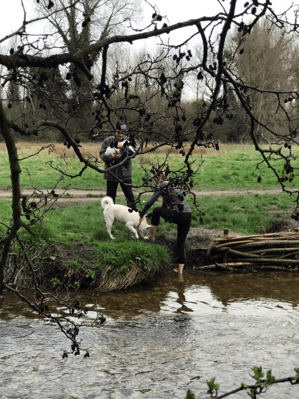 Eli, canine ambassador of LoveFit 2017