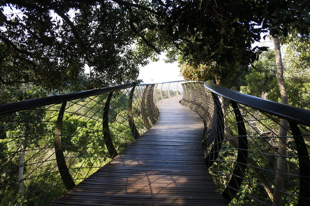 The Tree Canopy Walkway at Kirstenbosch