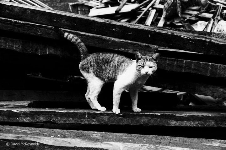 Street cat, Lower East Side, 1957.