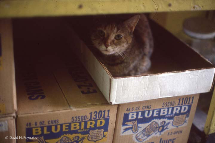 Store cat, NYC, June 1979.