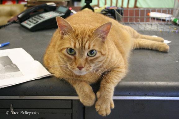 Rusty, WRL office cat. 2006.